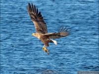 havsorn-fisk-2576