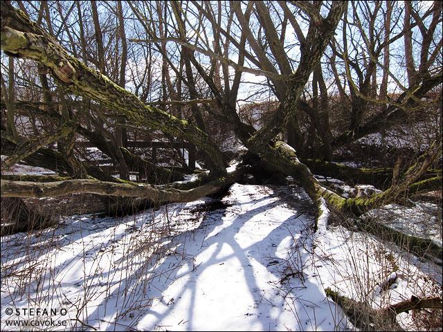 Vinter i mars