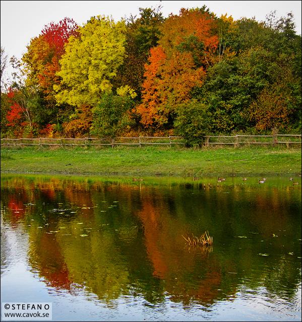 Färgade träd