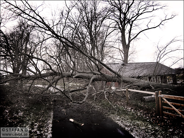Stormfällt träd
