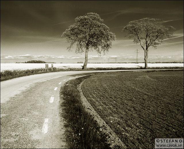 Två träd längs en landsväg