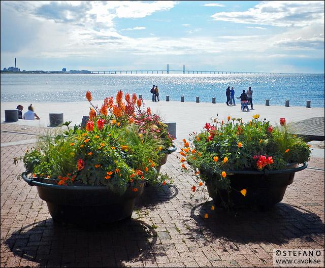 Sommar i Västra hamnen