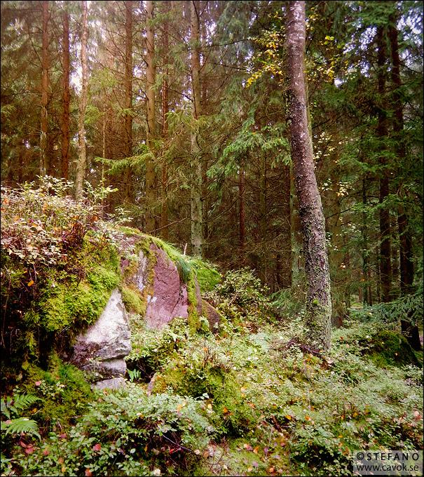 Granskogens dunkla ljus