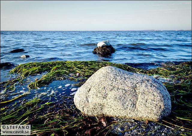 Sten och sjögräs