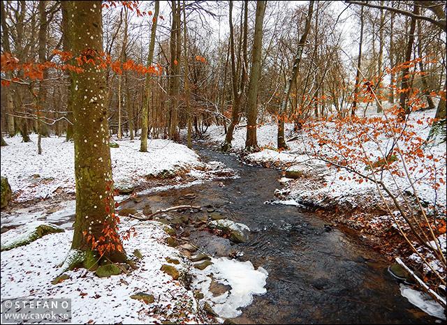 Vinter i Prästaskogen