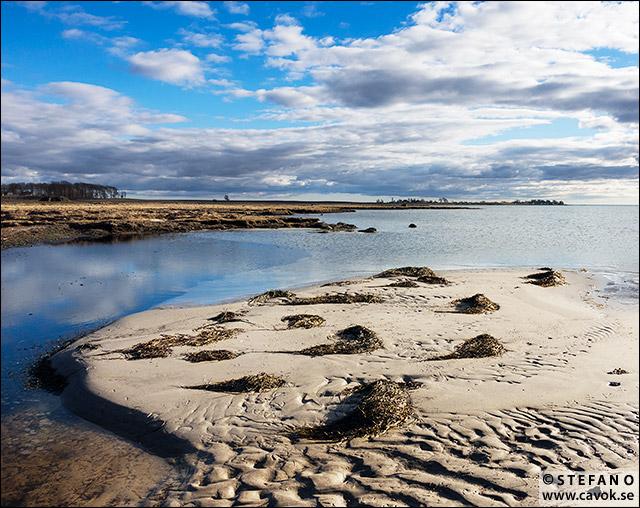 Salvikens strandängar