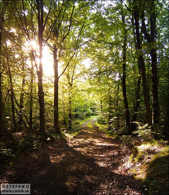 Sommar i Häckeberga