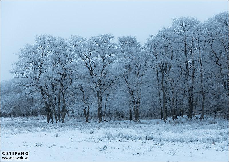 Frostiga träd i vinterdis