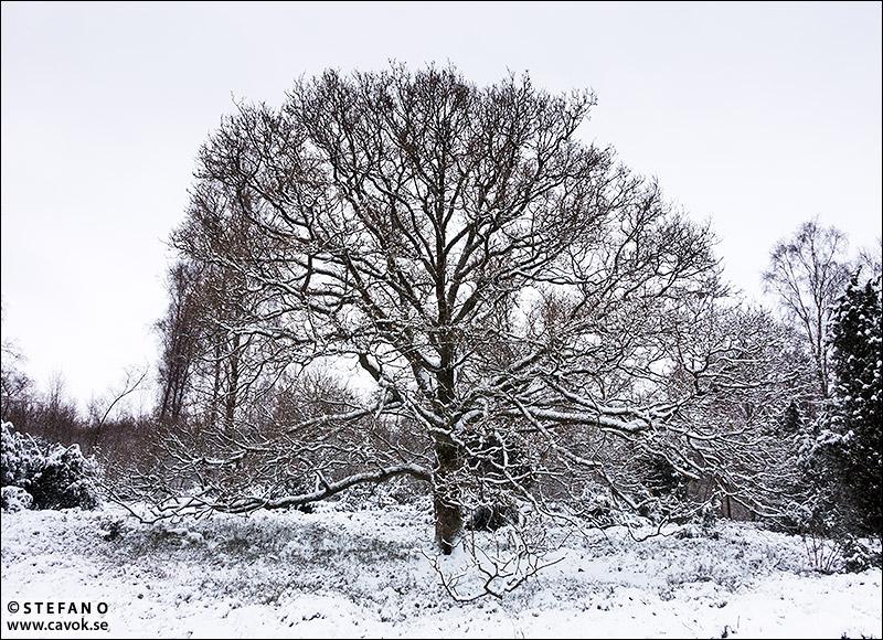 Den vita årstiden