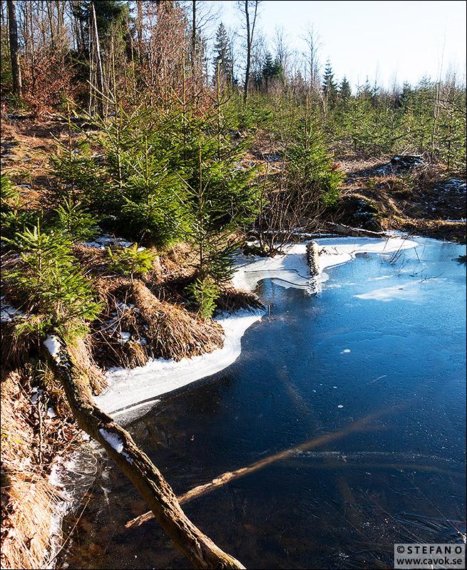 Is på skogsgölen