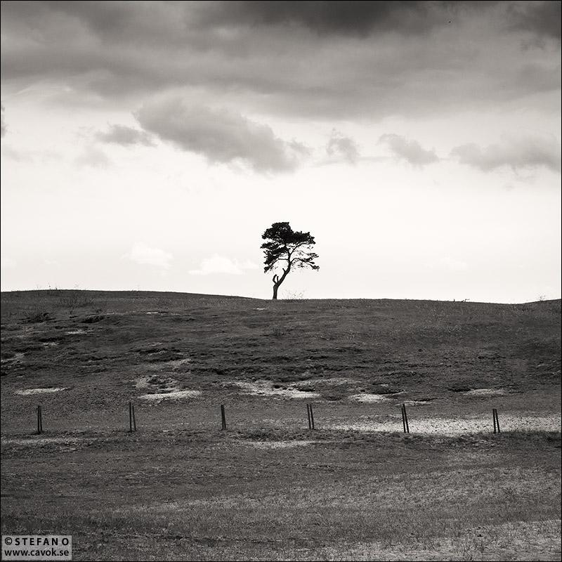Träd Haväng