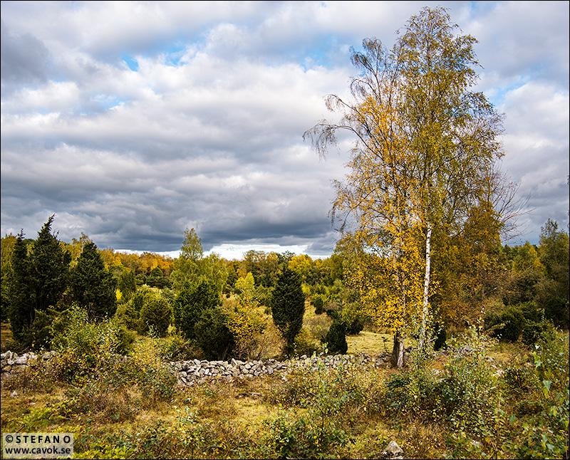 Hösten i antågande