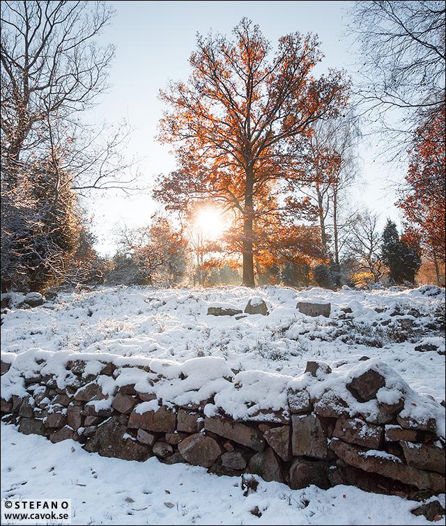Vinter fäladshagen