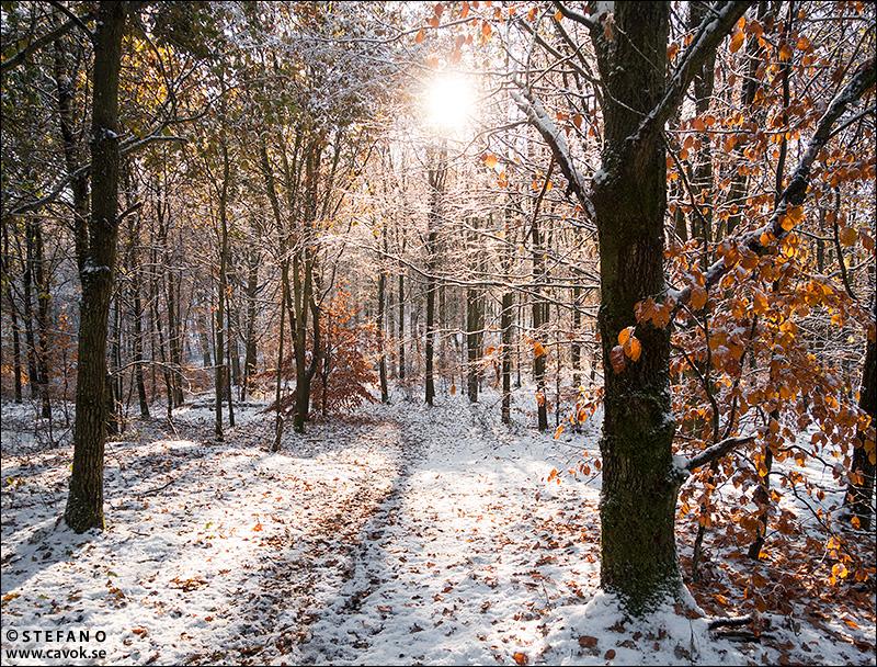 Vintern på tillfälligt besök