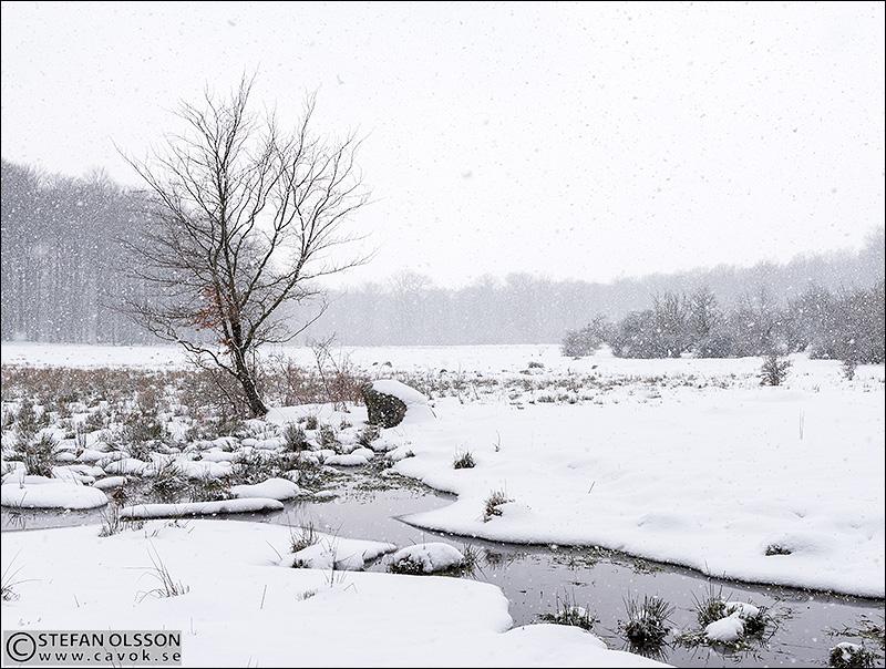 Vinter och snöfall i Dalby norreskog
