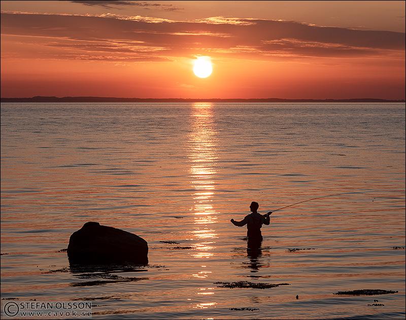 Flugfiske i solnedgången