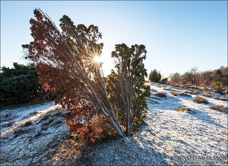Frostig novemberdag vid Billebjer