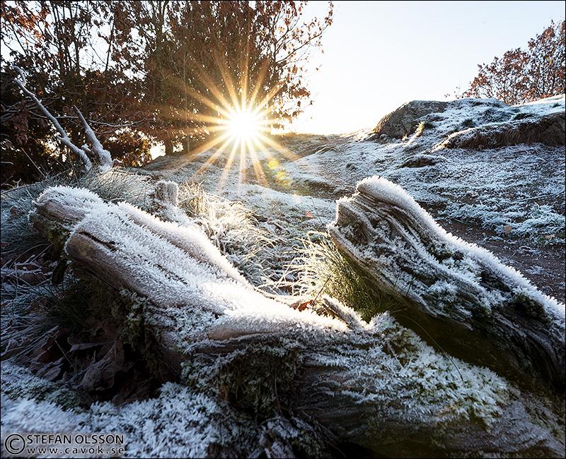 Frost på Billebjer