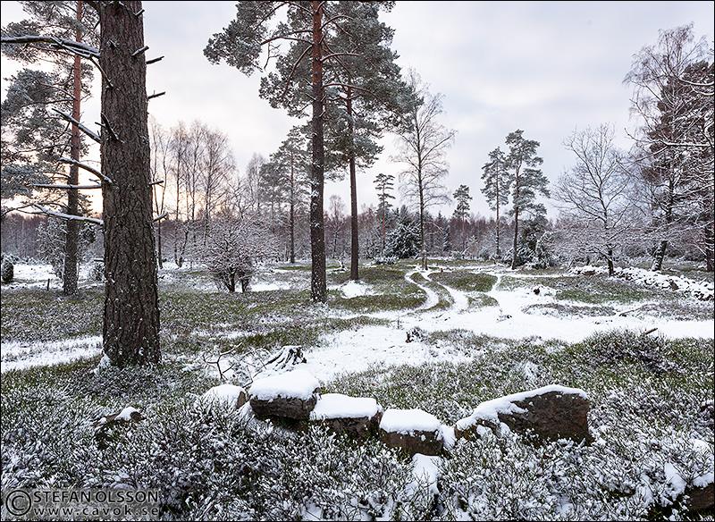 Snö i blåbärshagen