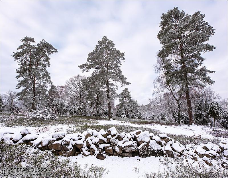 Snö och tallar, Måryd