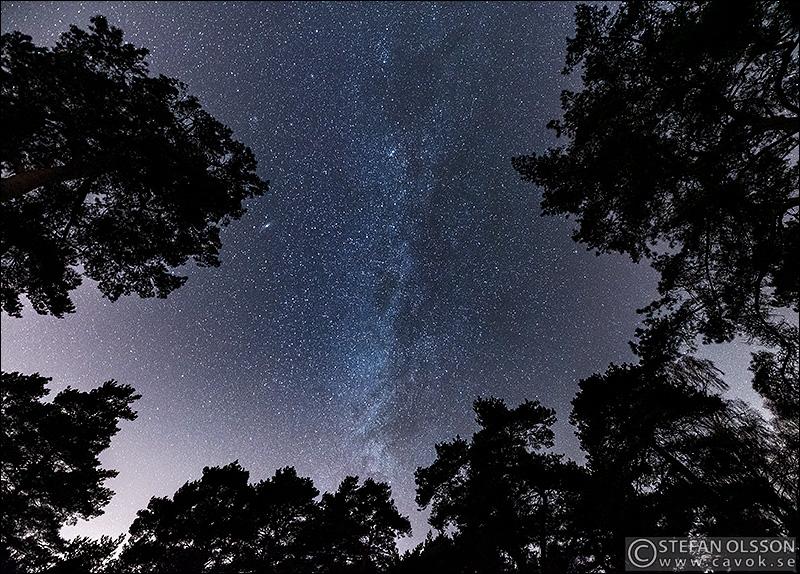 Stjärnhimmel med vintergatan över tallar