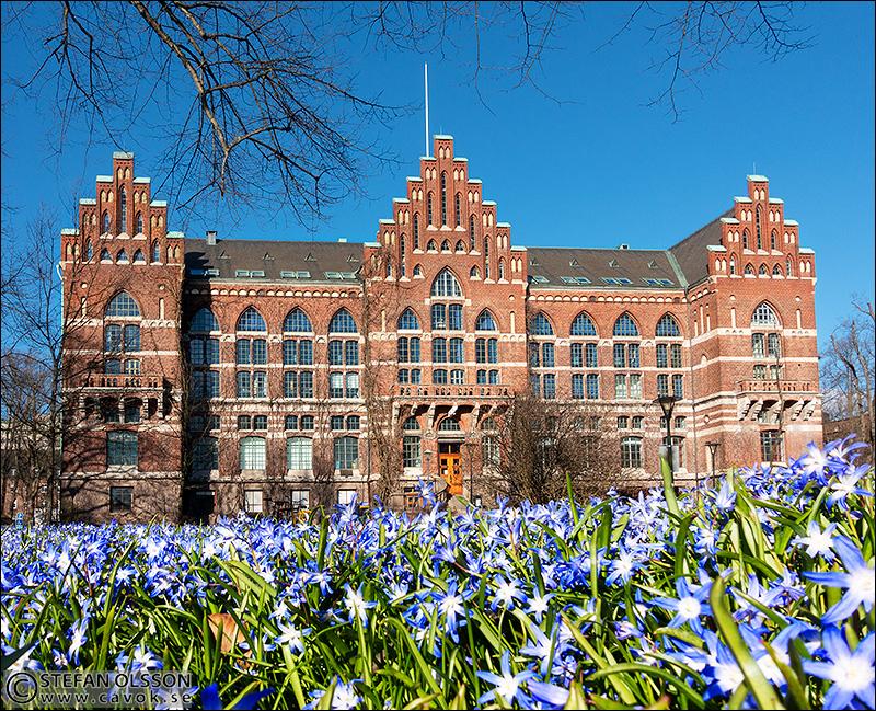 Scillor utanför UB i Lund