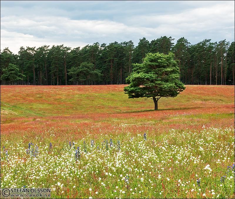 Landskap, Klingvalla - Revingehed