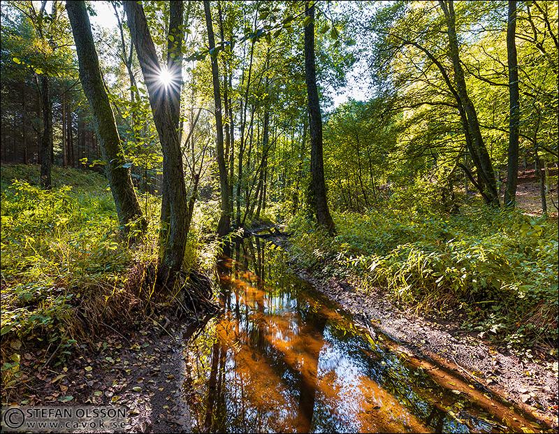 Bäck i Häckeberga naturreservat