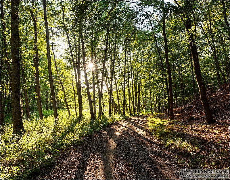Skogsväg i Häckeberga