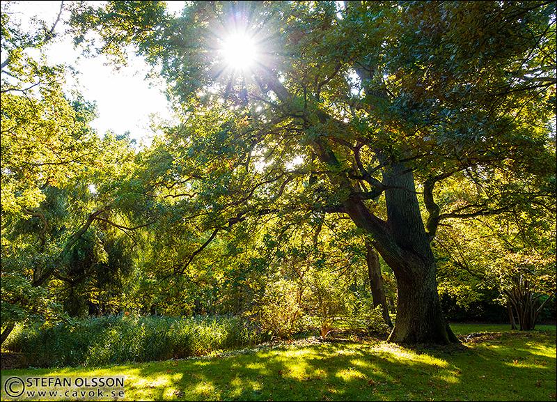Grönska i Alnarpsparken