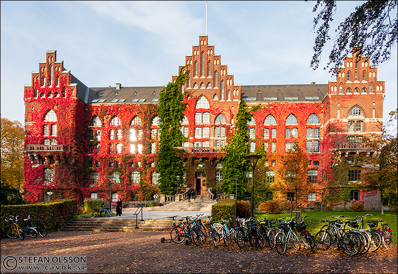 Röd murgröna på Universitetsbiblioteket i Lund