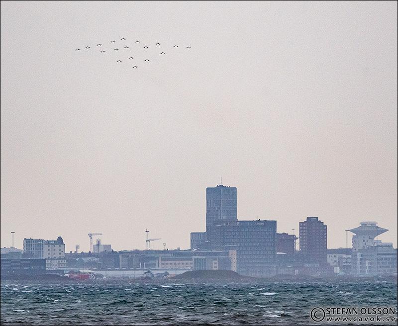 Julgransflygning över Malmö