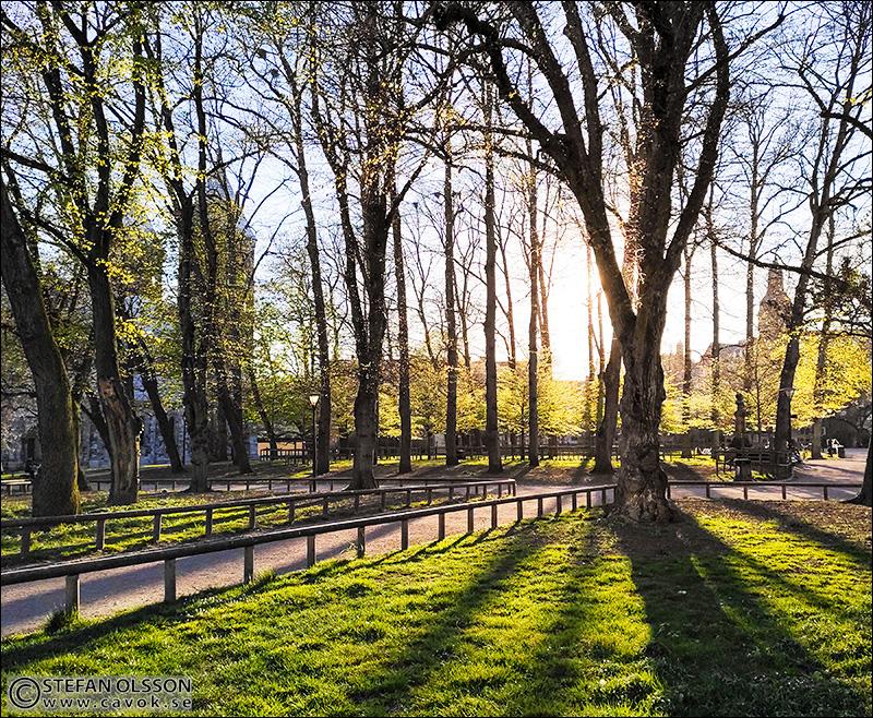 Lövsprickning i Lundagård