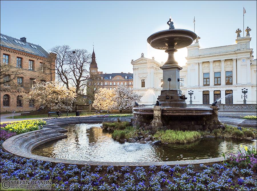 Blomsterprakt på Universitetsplatsen i Lund