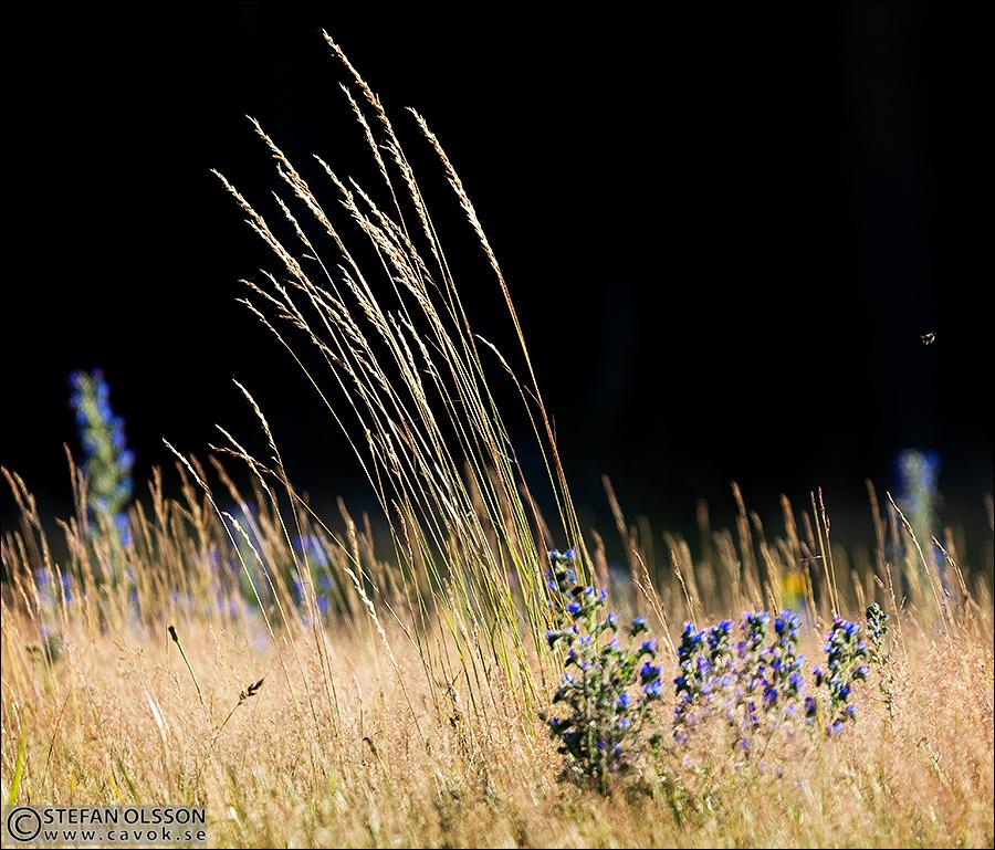 Gräs och blåeld