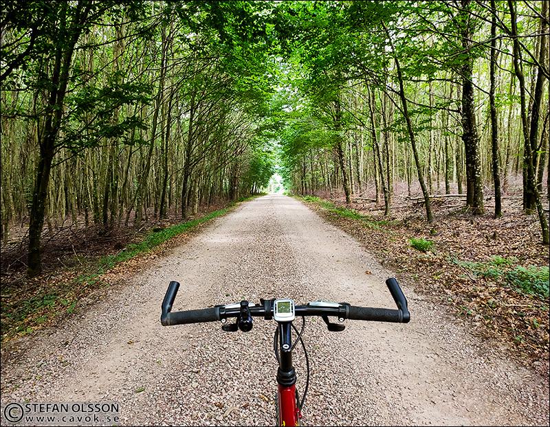 Vägen genom Hjularödsskogen