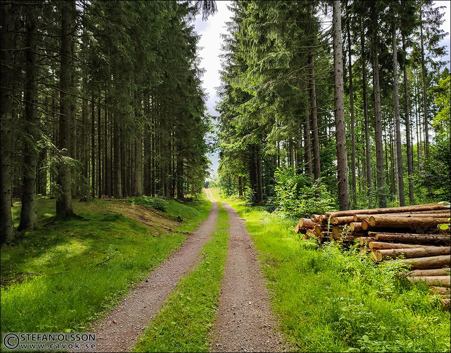 Skogsväg på Linderödsåsen