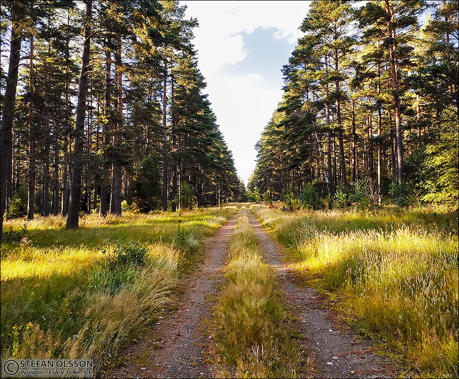Skogsväg i Vombs fure