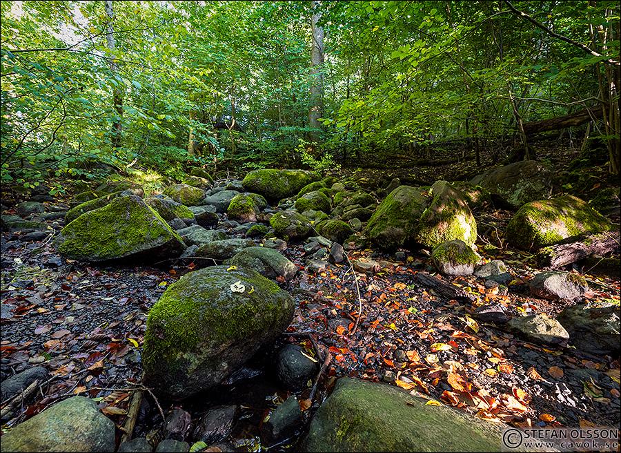 Stenar i bäckfåran - Dalby Söderskog
