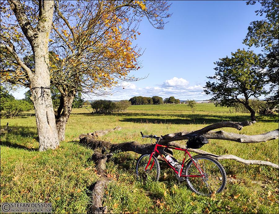Cykel, paus vid Vombs ängar