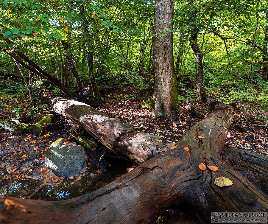 Nedfallna träd i Dalby Söderskog