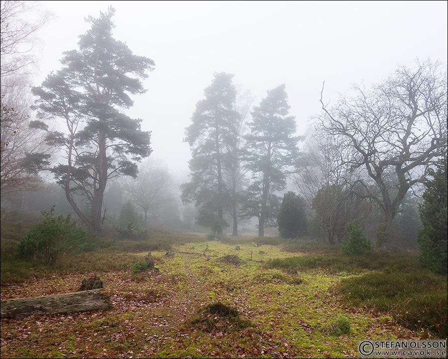 Dimma i Skrylleskogen