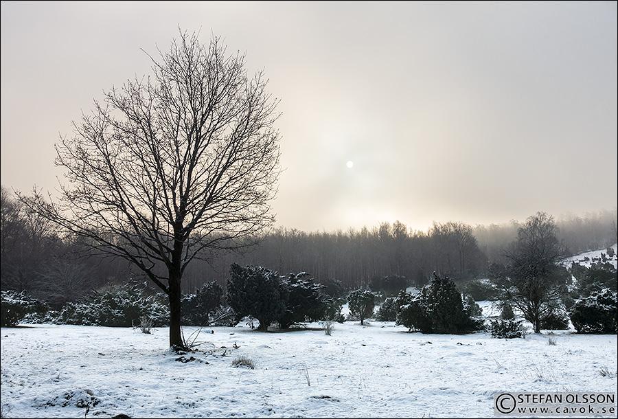Diffust vinterljus över Måryds enefälad