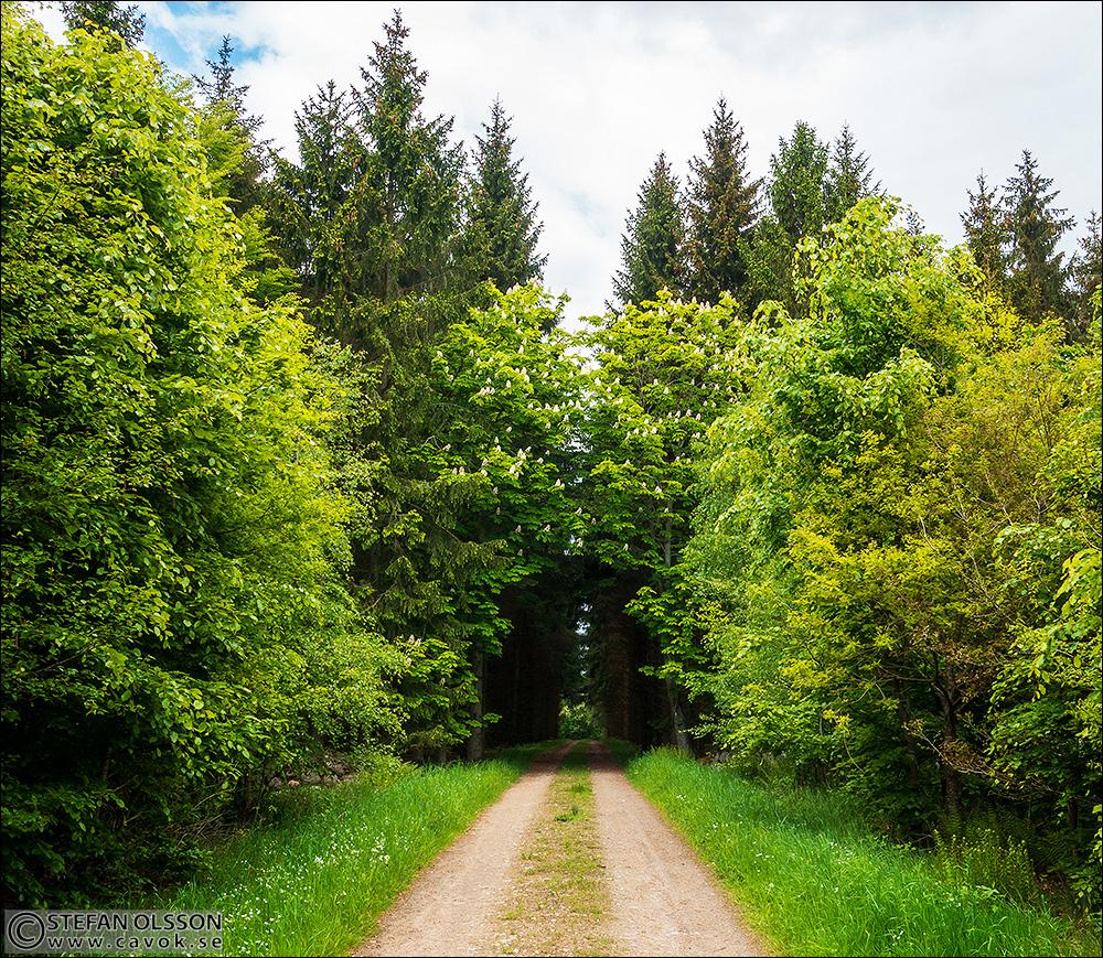 Portalen in i Borstbäckens naturreservat
