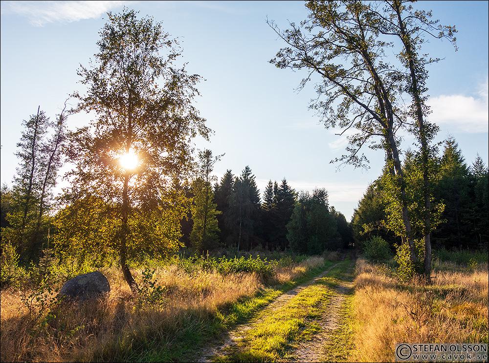 Skogsväg söder om Skotthusa