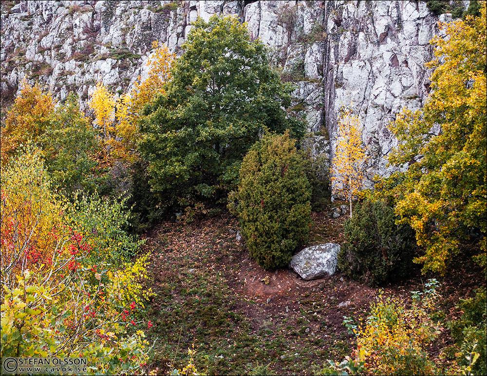 Billebjers klippa bakom färgrika träd