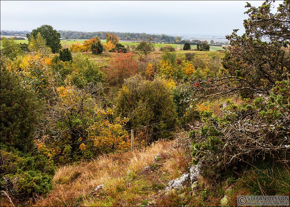 Utsikt över höstlandskap från Billebjer