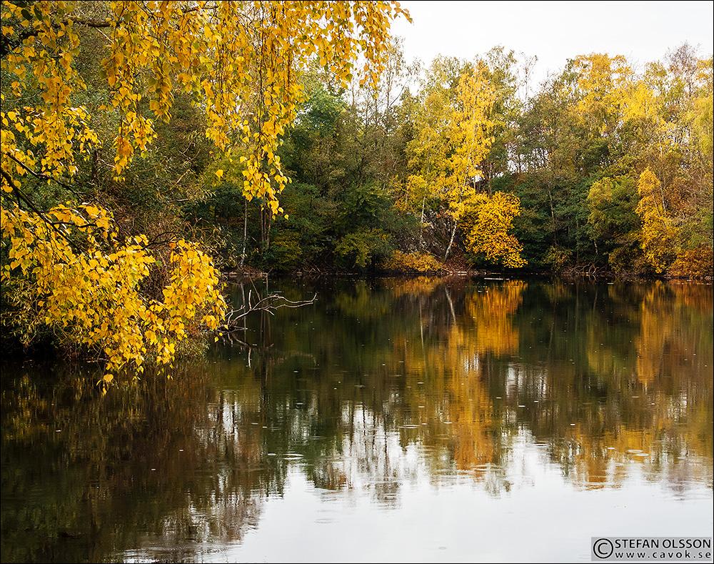 Gyllene björkar vid Billebjers sjö